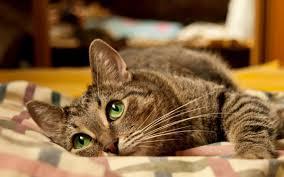 кот нагадил в кровать примета