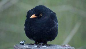птица-нагадила