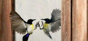 птица-стучится-в-стекло