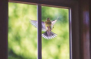 Птица-залетела-в-окно-приметы-и-суеверия