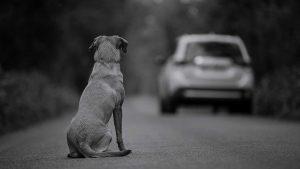 Сбить-собаку-на-машине