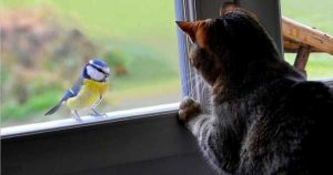 Птица залетела в дом