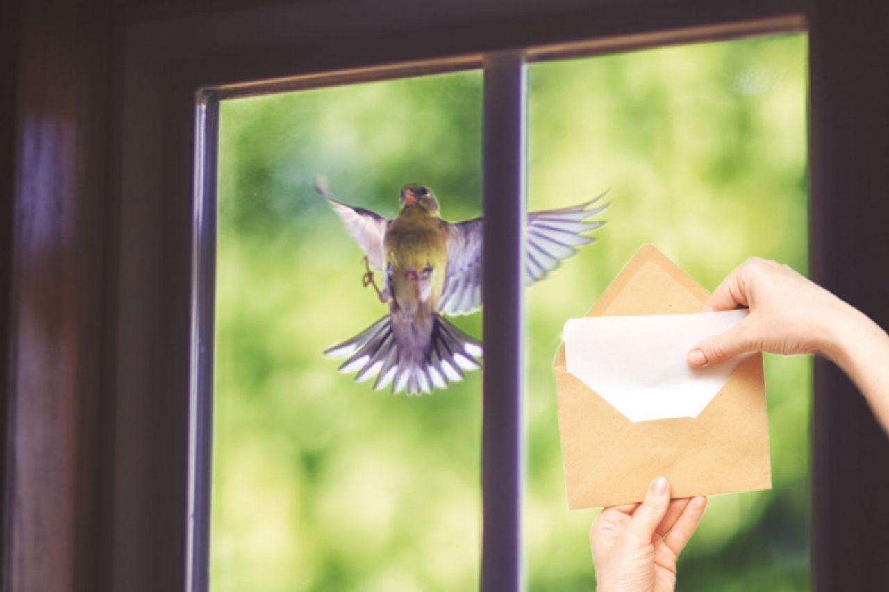 птица у окна приметы